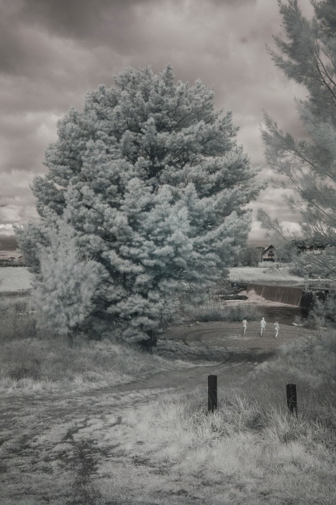 ON THE BANKS OF THE WOLLONDILLY RIVER JUST NEAR HOME. INFRA RED IMAGE.