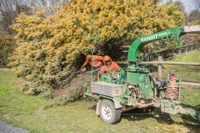 wattle-removal_09sep2016_0007-copy-3