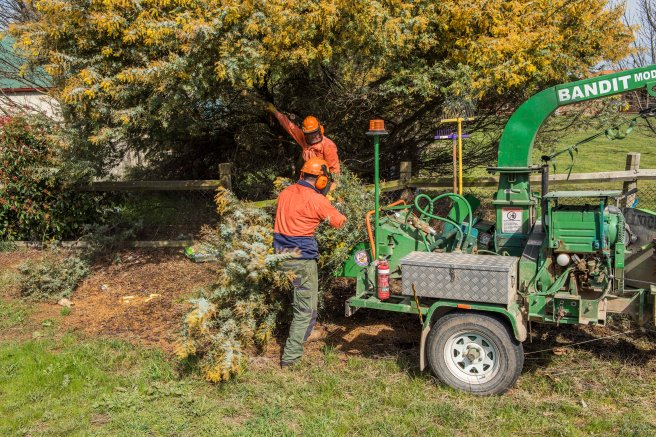 wattle-removal_09sep2016_0029-copy-3