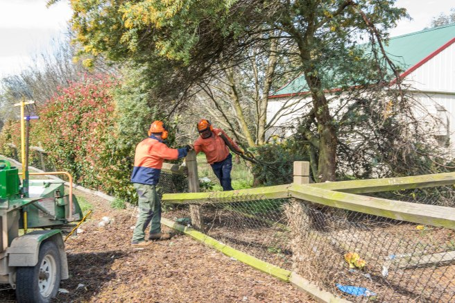 wattle-removal_09sep2016_0071-copy-3