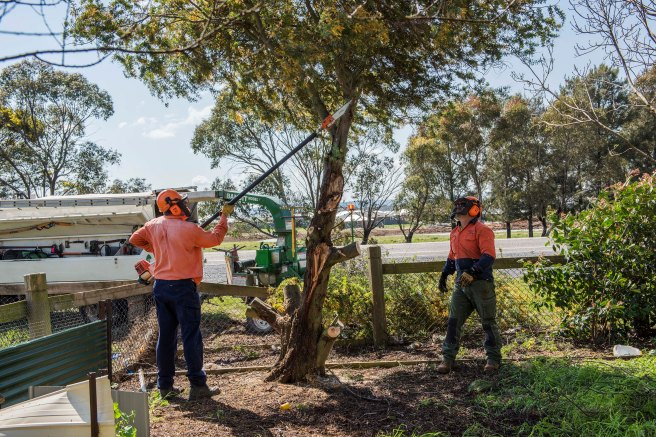 wattle-removal_09sep2016_0088-copy-3