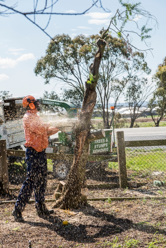 wattle-removal_09sep2016_0136-copy